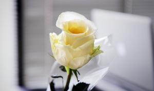biala roza